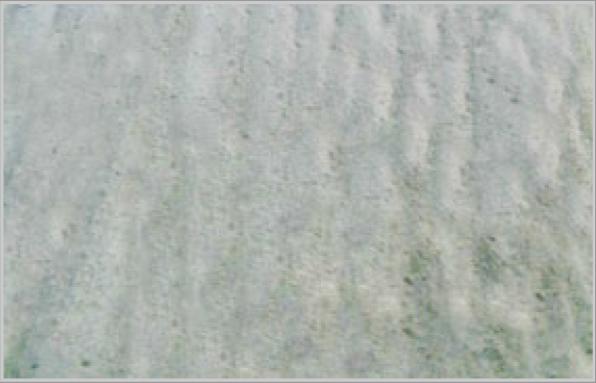 ④ 그린코트 1차도포
